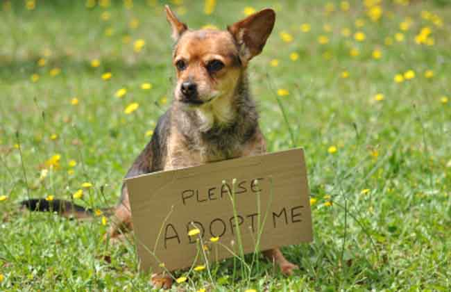 What to Consider When Adopting a Pet