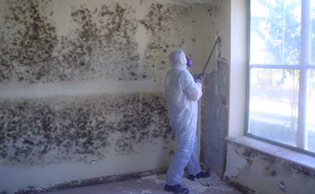 What You Need to Check on a Mold Removal Contractor